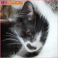 子猫と先住猫_a0389088_10595463.jpg
