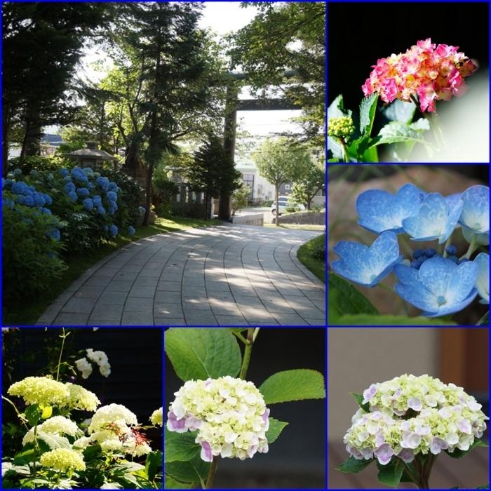 紫陽花の花_d0162994_08205438.jpg
