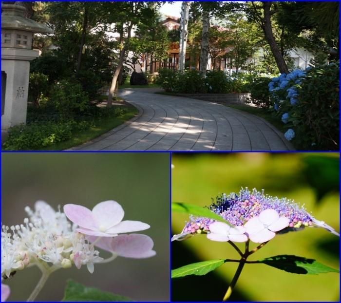 紫陽花の花_d0162994_08211496.jpg