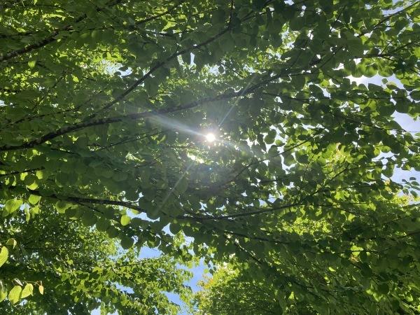 日々のコトの葉だより_b0174425_17055574.jpg