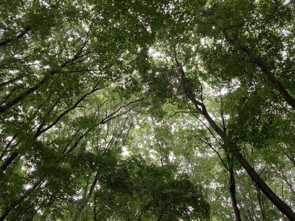 日々のコトの葉だより_b0174425_18412184.jpg