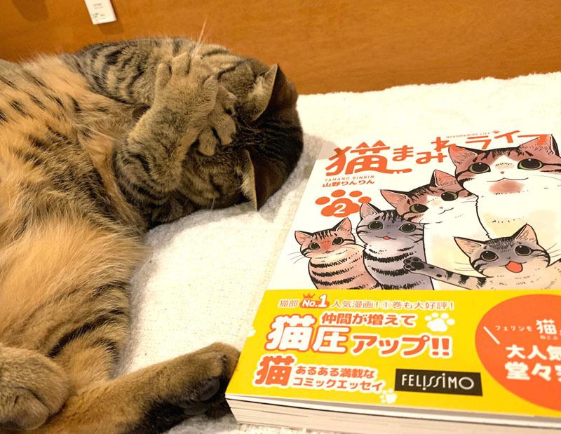 「猫まみれライフ」2巻発売!_d0118933_11094111.jpg
