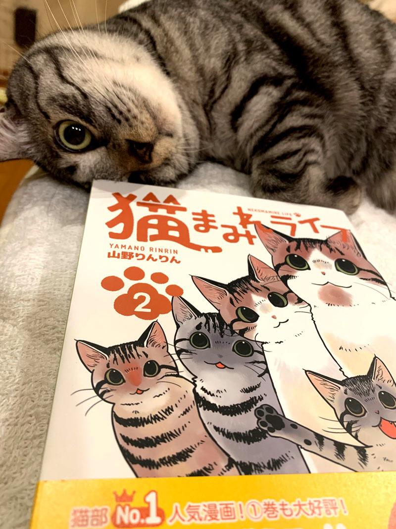 「猫まみれライフ」2巻発売!_d0118933_11094427.jpg