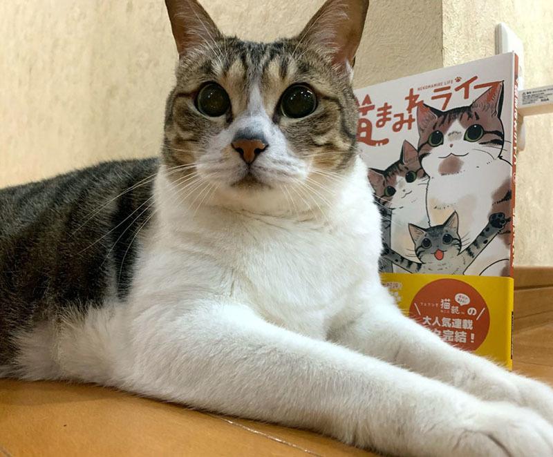 「猫まみれライフ」2巻発売!_d0118933_11094652.jpg
