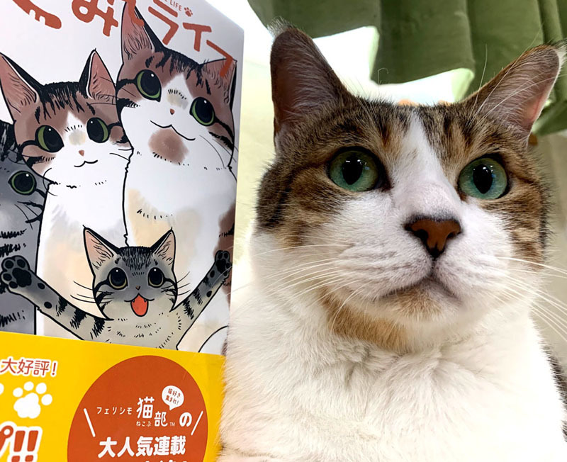 「猫まみれライフ」2巻発売!_d0118933_11094833.jpg