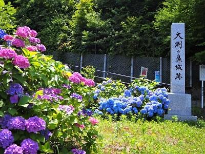 大仏公園のあじさい_2020.07.18_d0131668_10585257.jpg