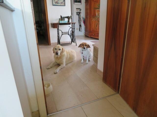 ゲスト犬もキッチン&ダイニングは禁止_c0211876_06023443.jpg