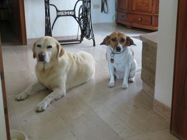 ゲスト犬もキッチン&ダイニングは禁止_c0211876_06025916.jpg