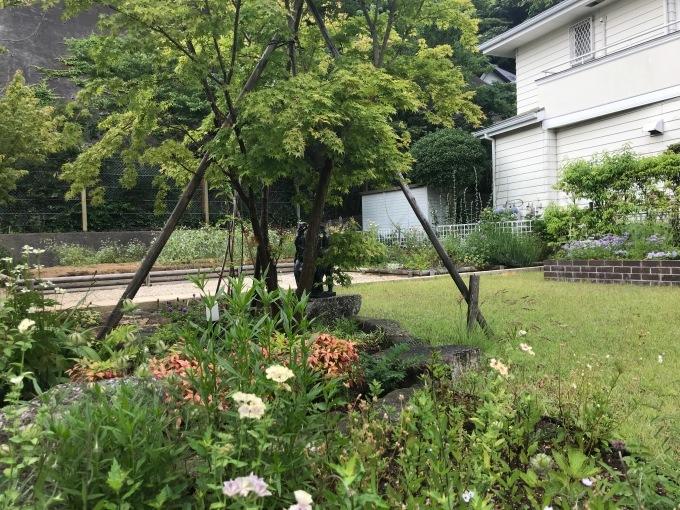 6月の草庭仕事 _b0167282_15085542.jpeg