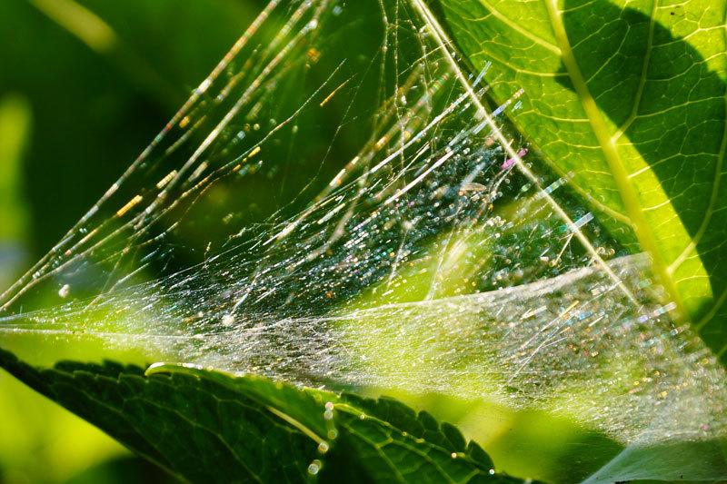 蜘蛛の巣の虹_d0162994_08221698.jpg