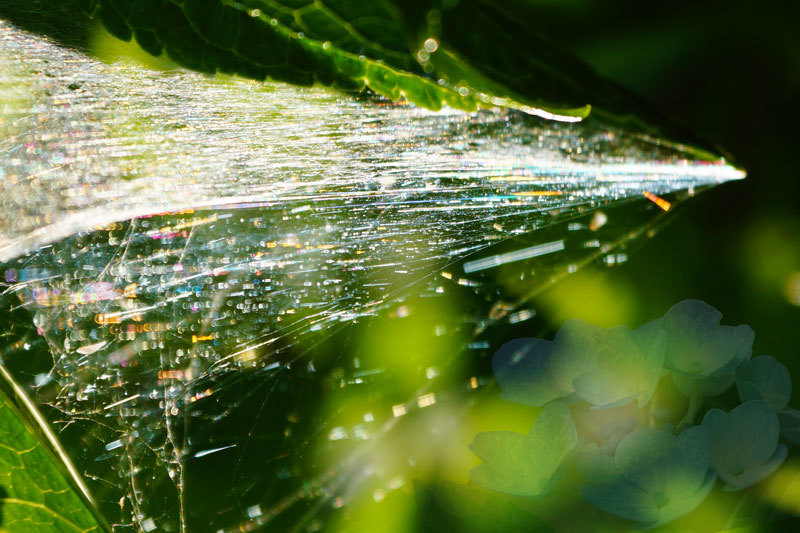 蜘蛛の巣の虹_d0162994_08222796.jpg