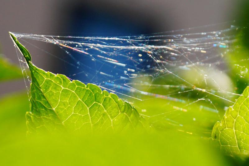 蜘蛛の巣の虹_d0162994_08223935.jpg