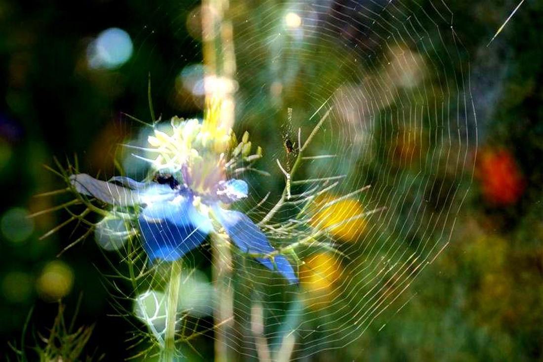 蜘蛛の巣の虹_d0162994_08225122.jpg