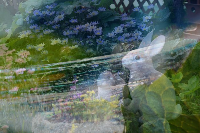 蜘蛛の巣の虹_d0162994_08230685.jpg