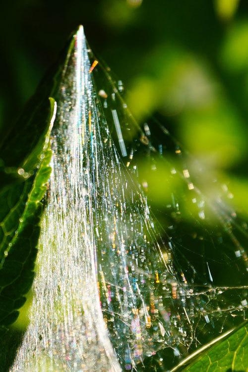 蜘蛛の巣の虹_d0162994_08232545.jpg