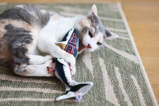 猫は釣るんじゃなくて飛んで獲る_e0364523_22050223.jpg