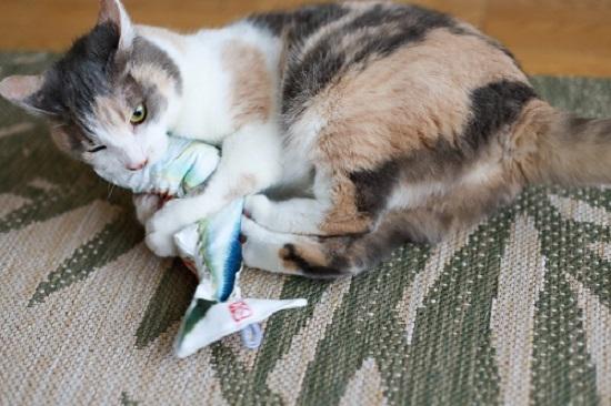 猫は釣るんじゃなくて飛んで獲る_e0364523_22050325.jpg
