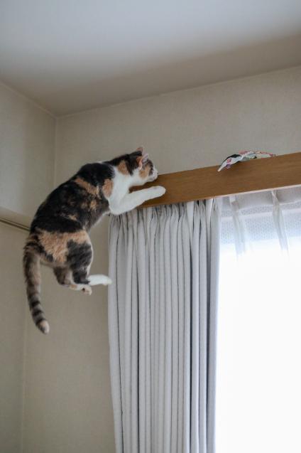 猫は釣るんじゃなくて飛んで獲る_e0364523_22054670.jpg