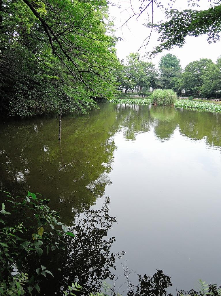 ある風景:Kikuna pond, Yokohama@July #1_c0395834_11560704.jpg