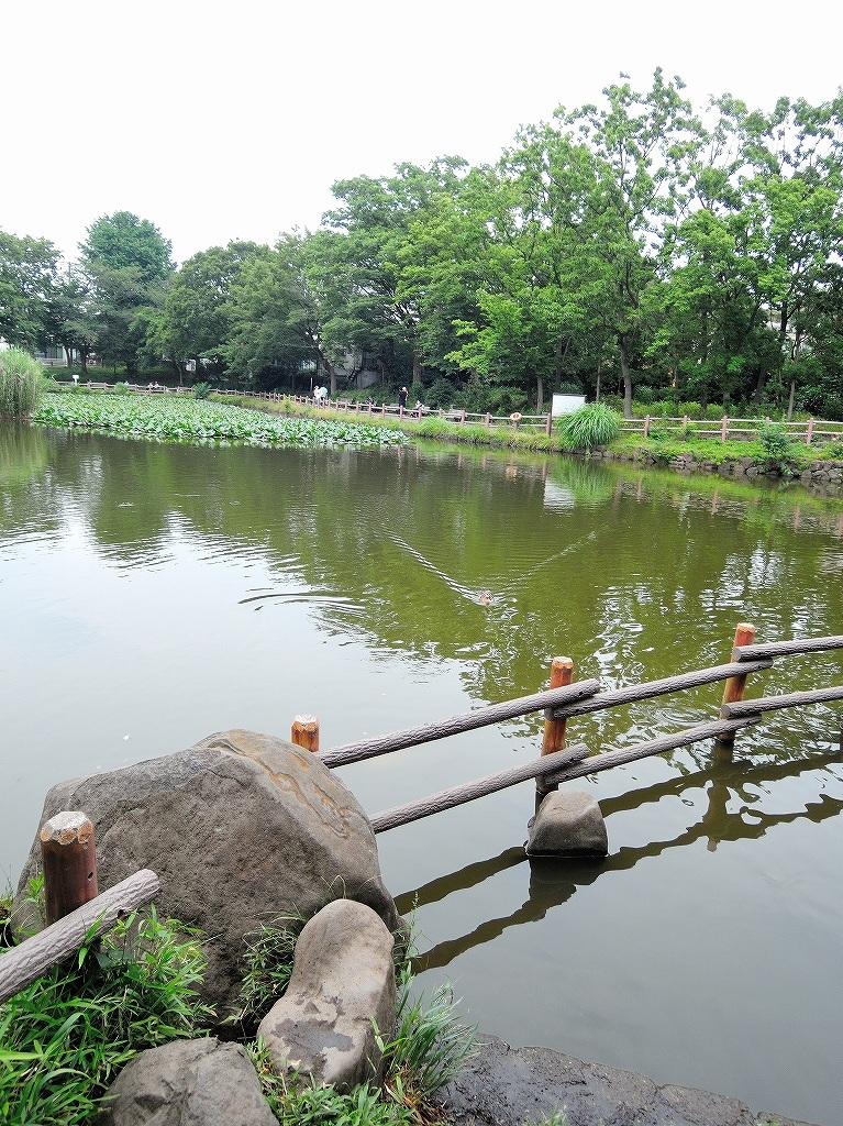 ある風景:Kikuna pond, Yokohama@July #1_c0395834_11560762.jpg