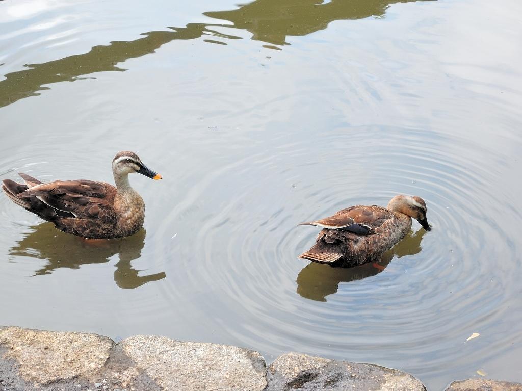 ある風景:Kikuna pond, Yokohama@July #1_c0395834_11560776.jpg