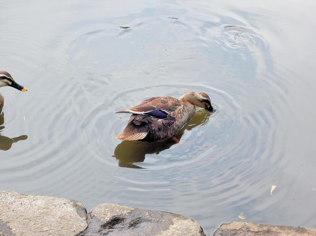 ある風景:Kikuna pond, Yokohama@July #1_c0395834_11560887.jpg