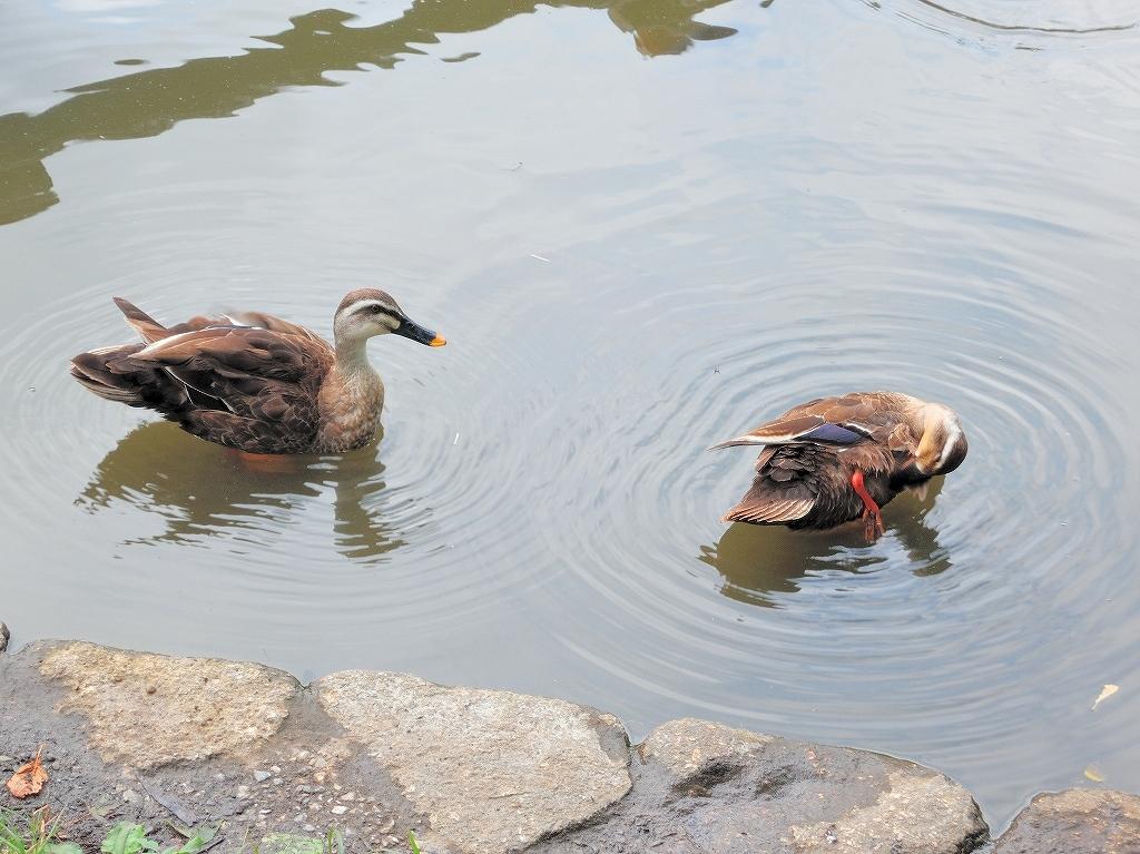 ある風景:Kikuna pond, Yokohama@July #2_c0395834_23204854.jpg