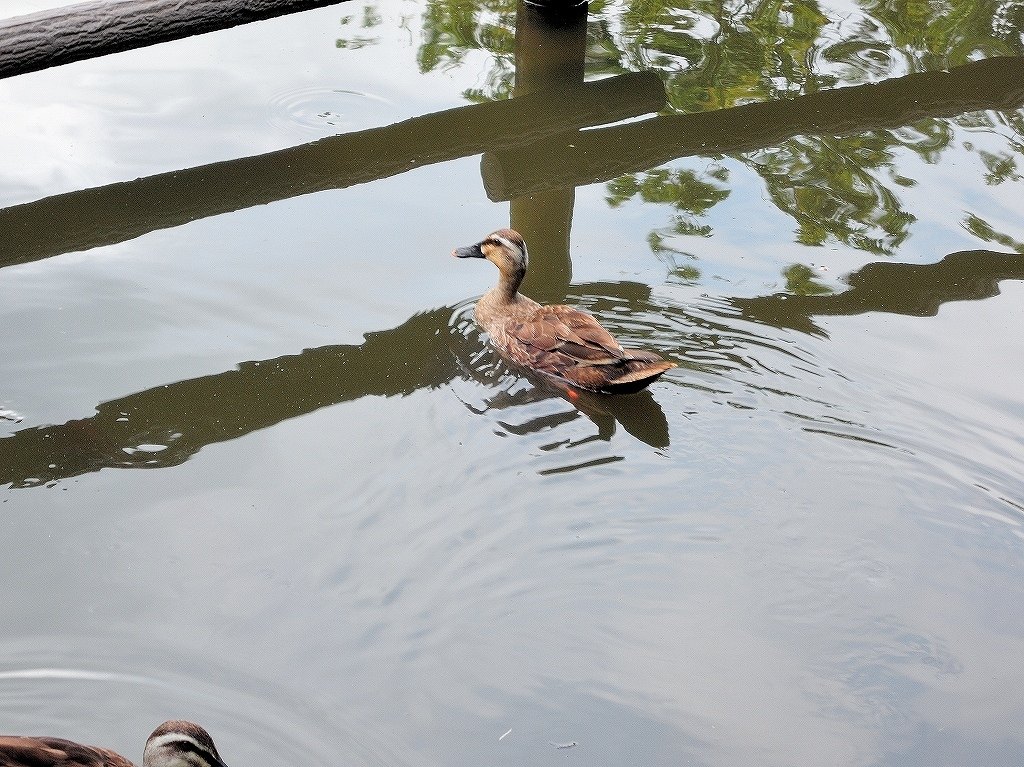 ある風景:Kikuna pond, Yokohama@July #2_c0395834_23204925.jpg
