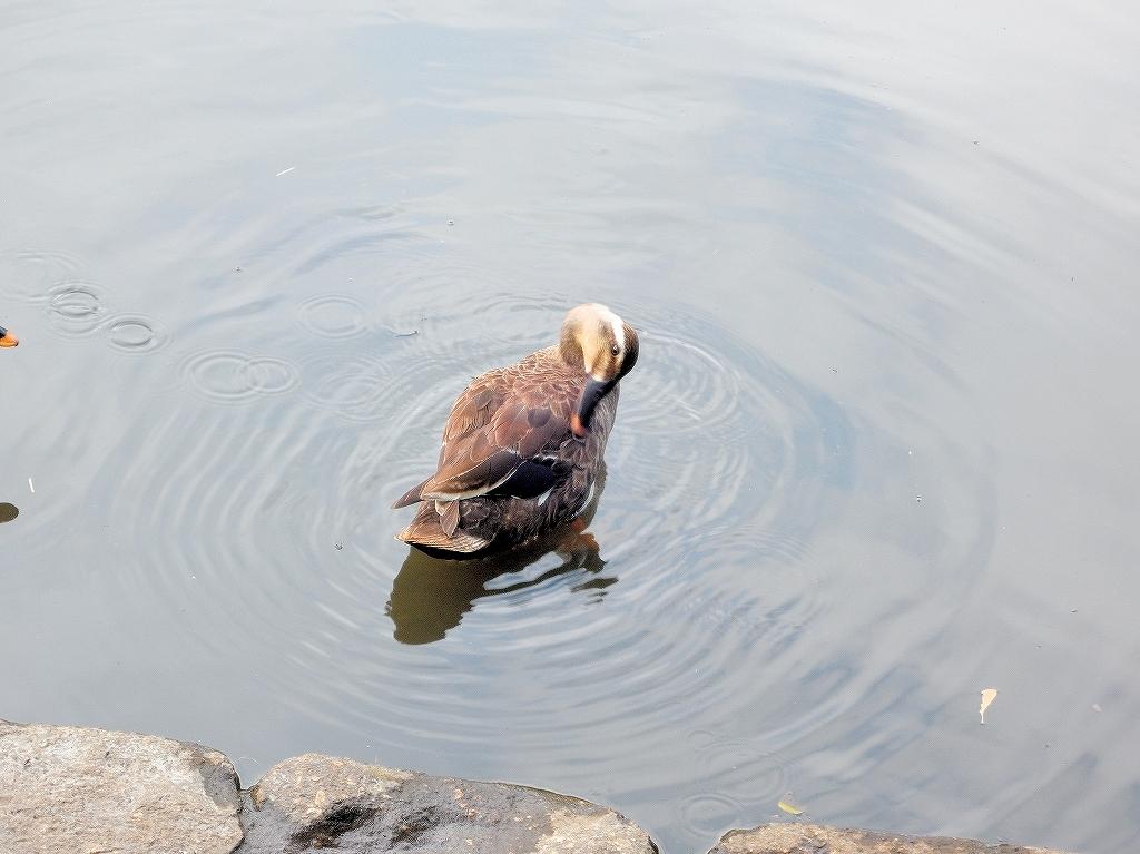 ある風景:Kikuna pond, Yokohama@July #2_c0395834_23204954.jpg