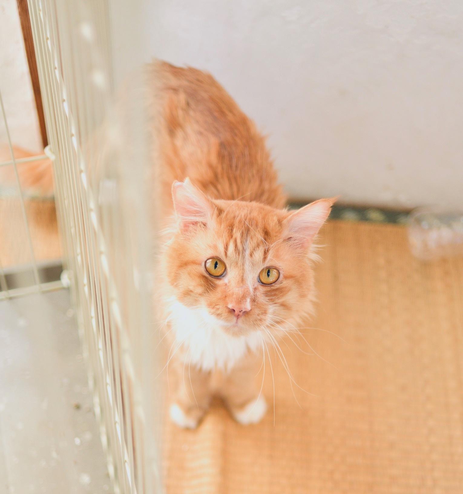 7月26日 動愛園 糸島 保護猫譲渡会_d0073743_20062597.jpeg