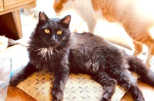 7月26日 動愛園 糸島 保護猫譲渡会_d0073743_20064648.jpeg