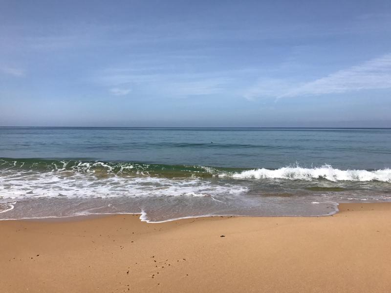 【海で拾った石】 十二石「海」_f0169147_16193524.jpg