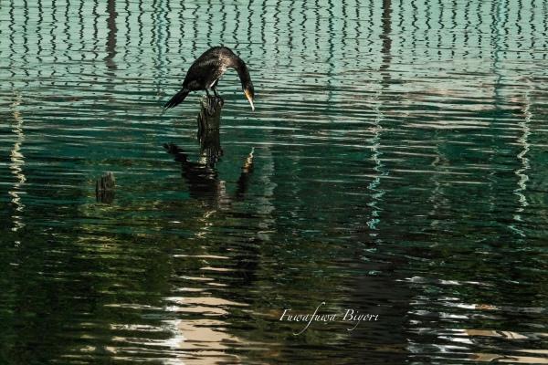 鳥の楽園 **_d0344864_19360828.jpg