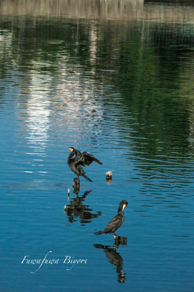 鳥の楽園 **_d0344864_19371297.jpg