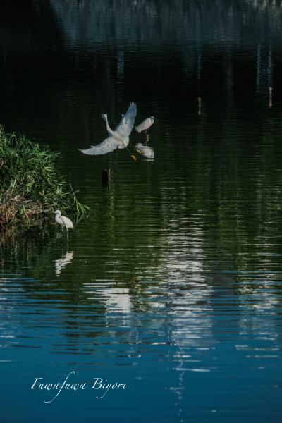 鳥の楽園 **_d0344864_19373709.jpg