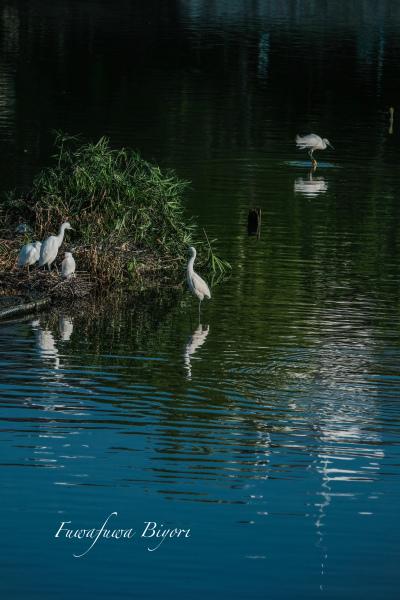 鳥の楽園 **_d0344864_19381318.jpg