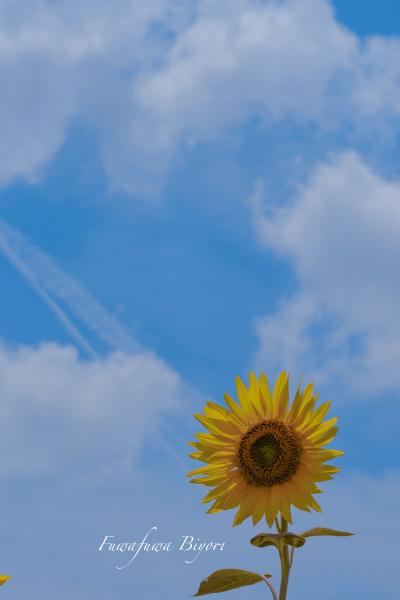 夏の花と言えば ひまわり **_d0344864_21010414.jpg