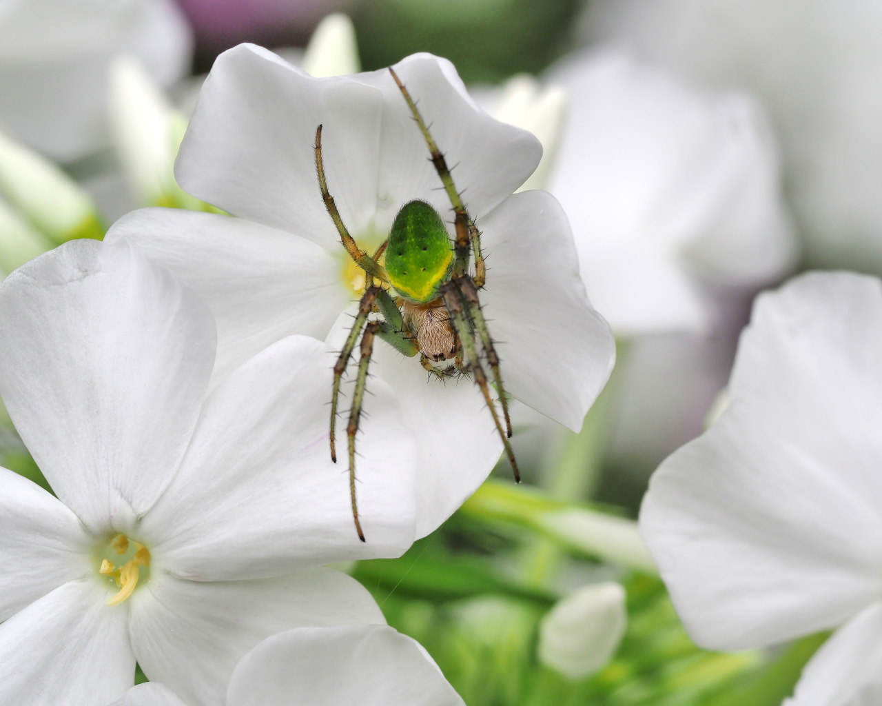 フラワーパークで 花・虫・蛙_c0305565_17105668.jpg