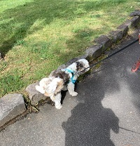公園散歩とラーメン「虎鉄」_d0140668_20490353.jpg