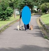 公園散歩とラーメン「虎鉄」_d0140668_20491040.jpg