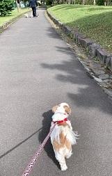 公園散歩とラーメン「虎鉄」_d0140668_20491786.jpg