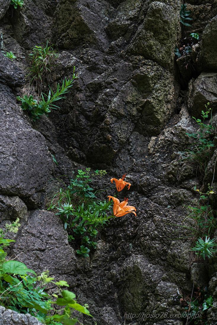 イワユリの咲く風景_e0214470_07572434.jpg