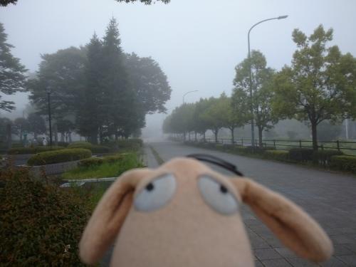 朝霧の中の散歩_c0158573_08063902.jpg