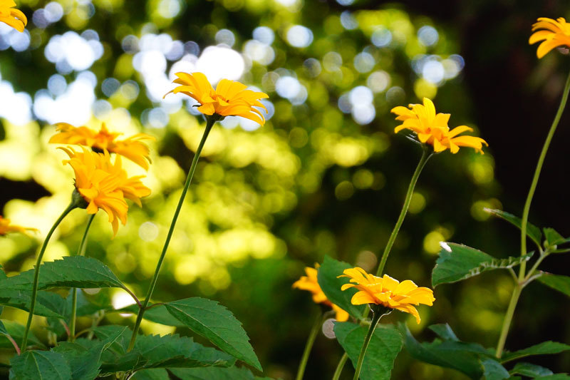 西野神社_d0162994_08215889.jpg