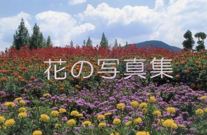花の写真集_e0180612_11461748.jpg