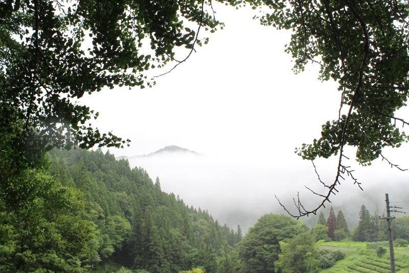 稲武大野瀬梨野の景色と桶茶用茶葉つくり_b0220318_13182594.jpg