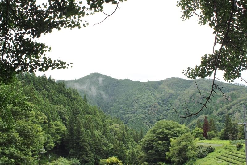 稲武大野瀬梨野の景色と桶茶用茶葉つくり_b0220318_13184663.jpg