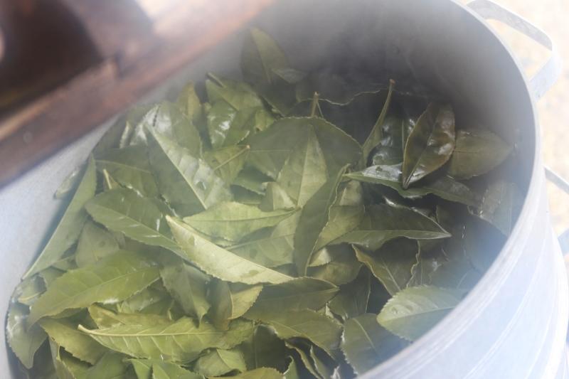 稲武大野瀬梨野の景色と桶茶用茶葉つくり_b0220318_13192052.jpg