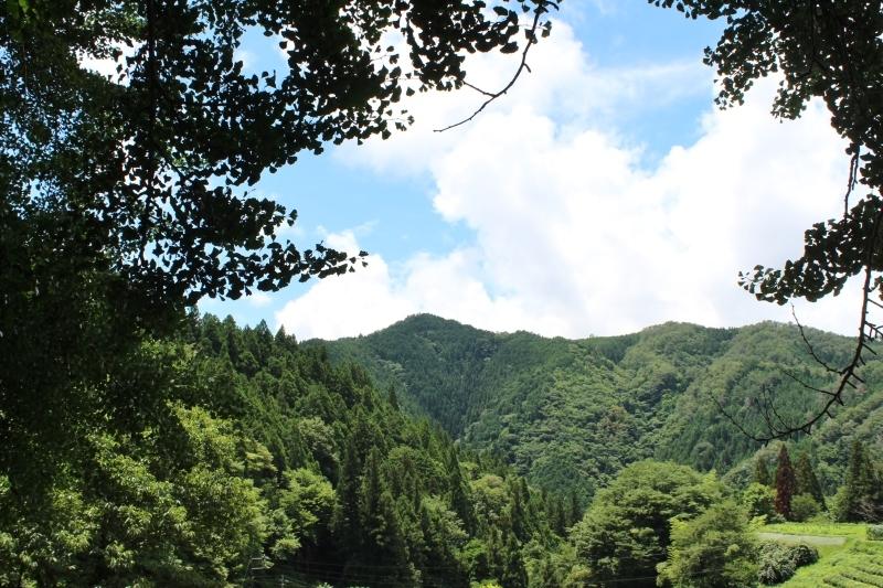 稲武大野瀬梨野の景色と桶茶用茶葉つくり_b0220318_13194207.jpg