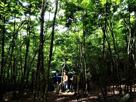 みんなの森活動日記_d0105723_08143348.jpg